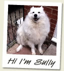 Sully the white fluffy dog